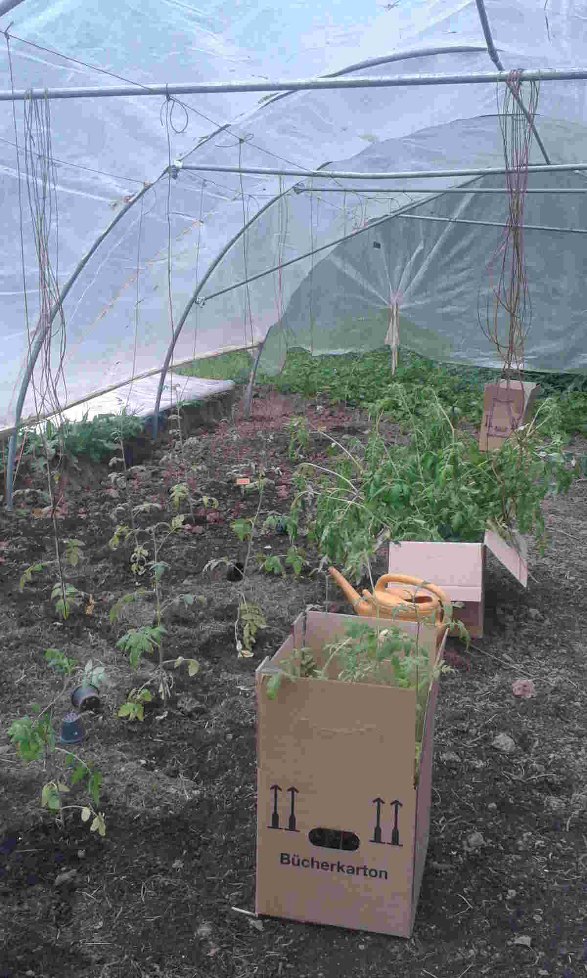 Tomaten-Gewächshaus_klein